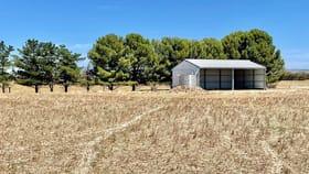 Rural / Farming commercial property for sale at Sec 509 Cnr Navarino Road & Nine Mile Road Angas Plains SA 5255