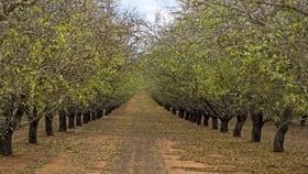 Rural / Farming commercial property for sale at 3 Lots Mackey & Gordon Road Loxton SA 5333