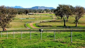 Rural / Farming commercial property for sale at 501 Christmas Creek Road Tabooba QLD 4285