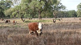 Rural / Farming commercial property for sale at 'Riversdale' Castlereagh Hwy Mendooran NSW 2842