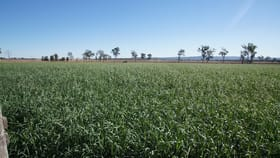 Rural / Farming commercial property for sale at Lester Road Morton Vale QLD 4343