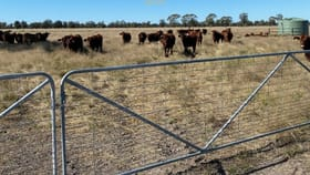 Rural / Farming commercial property for sale at Cardonis Road Wee Waa NSW 2388