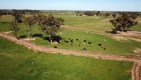 Rural / Farming commercial property for sale at 1752 Graham Road Tongala VIC 3621