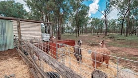 Rural / Farming commercial property for sale at 298 Glencoe Road Coverty QLD 4613