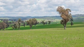 """Rural / Farming commercial property for sale at """"Loloma""""/127 Surveyors Creek Rd Walcha NSW 2354"""