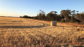Rural / Farming commercial property for sale at 11388 Purdy Road South Kununoppin WA 6489