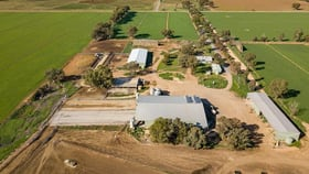 Rural / Farming commercial property for sale at 183 South Coree Road Finley NSW 2713