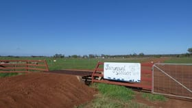 Rural / Farming commercial property for sale at 3547 North Gradna Road, St George via Goondiwindi QLD 4390