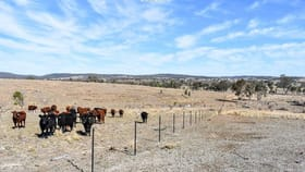 Rural / Farming commercial property for sale at 1730 Rocky Creek Road Emmaville NSW 2371
