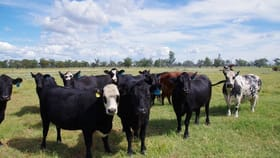 Rural / Farming commercial property for sale at 93 Old Pilliga Road Wee Waa NSW 2388