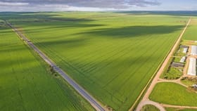 Rural / Farming commercial property for sale at . Cnr Augusta Hwy & Wheat Road Beaufort SA 5550
