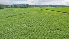Rural / Farming commercial property for sale at 25-31 Eagleby Road Eagleby QLD 4207