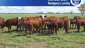 Rural / Farming commercial property for sale at . West Mooculta Bourke NSW 2840