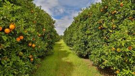 Rural / Farming commercial property for sale at 92-93 Gordon Avenue Colignan VIC 3494
