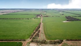 Rural / Farming commercial property for sale at 768 Jillett Road 'Mallevale' Ardlethan NSW 2665