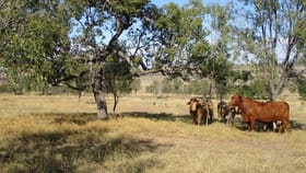 Rural / Farming commercial property for sale at 83 ACRES Bell QLD 4408