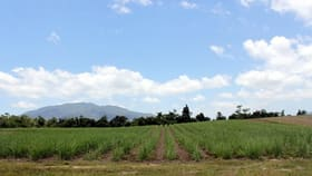 Rural / Farming commercial property for sale at LOT 2 FELUGA ROAD Feluga QLD 4854
