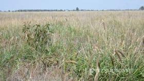 Rural / Farming commercial property for sale at 0 Burra Burri Creek Road, Pelican Chinchilla QLD 4413