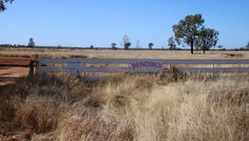 Rural / Farming commercial property for sale at 545 Bendeboi Road Surat QLD 4417