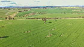 Rural / Farming commercial property for sale at 00 Currawong Rd Young NSW 2594