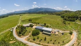 Rural / Farming commercial property for sale at 479 Miallo Bamboo Creek Road Mossman QLD 4873
