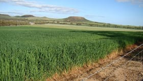 Rural / Farming commercial property for sale at 61 Eastough Yetna Road Yetna WA 6532