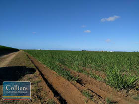 Rural / Farming commercial property for sale at 41 Ripley Road Brandon QLD 4808