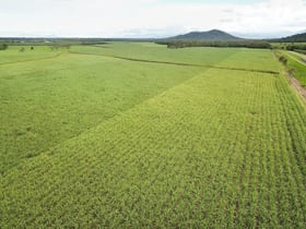 Rural / Farming commercial property for sale at Cardstone Road Dingo Pocket QLD 4854