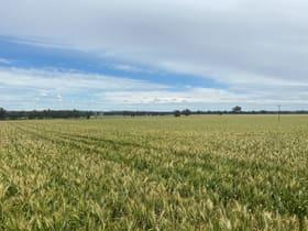 Rural / Farming commercial property for sale at 2172 Osborne Yerong Creek Road Yerong Creek NSW 2642