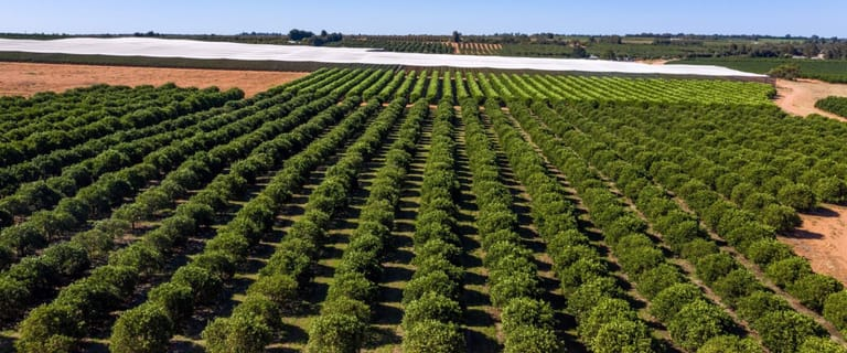 Horticulture commercial property for sale at Mirage Citrus 582 Government Road Renmark West SA 5341