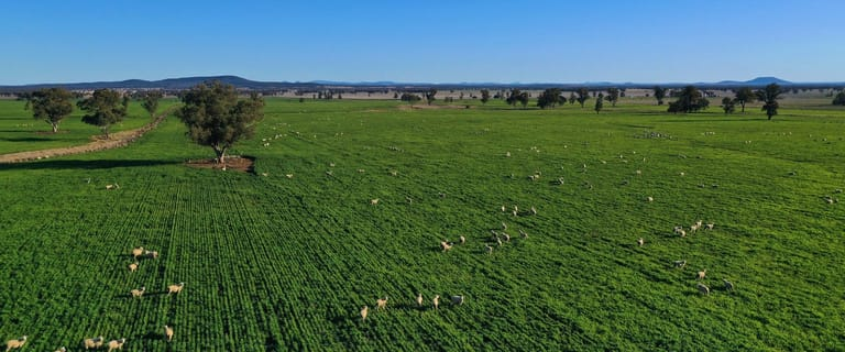 Rural / Farming commercial property for sale at Gunnedah NSW 2380