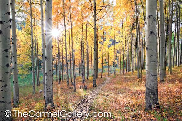 A_walk_through_autumn_rooc8w