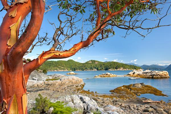 Red-arbutus-tree_vnkjtw