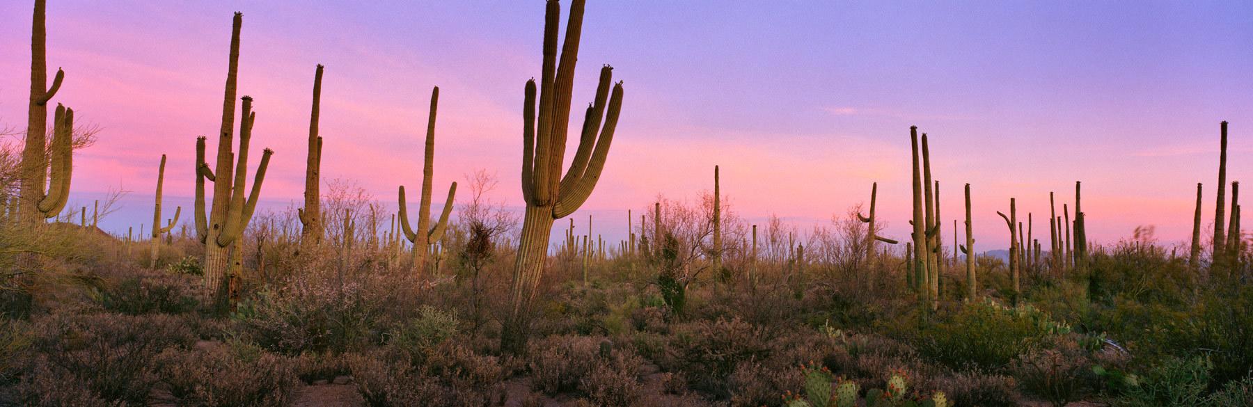 Lightbox_jorstad_saguaro_tfxkks