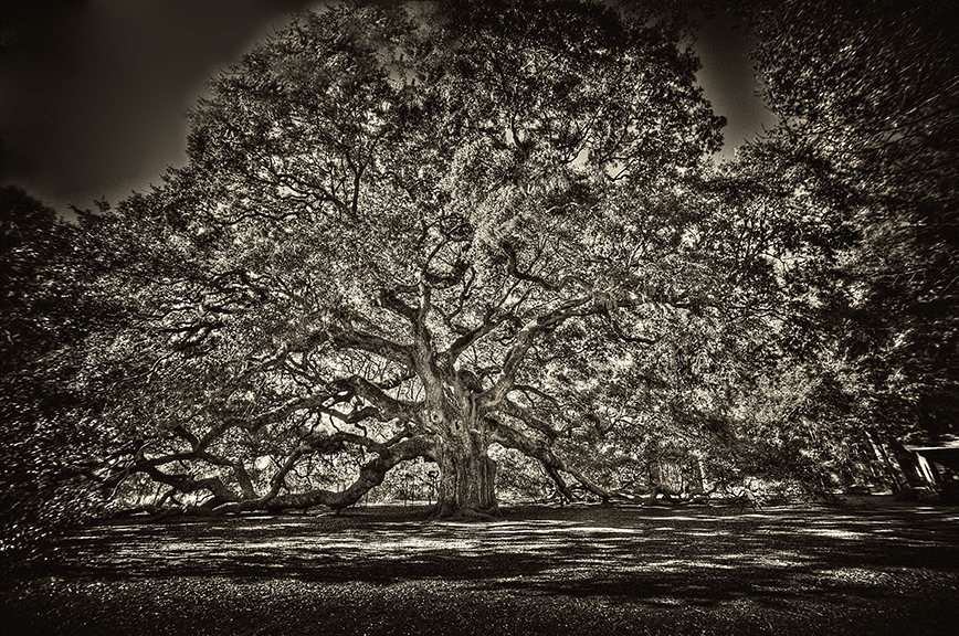 Angel_oak_sepia_canvas_copy_pdbteu