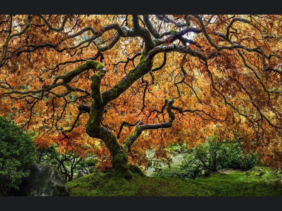 Tree_of_zen_ksx3dc