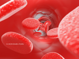 Blutbild aldecastudio fotoliarqdlrn