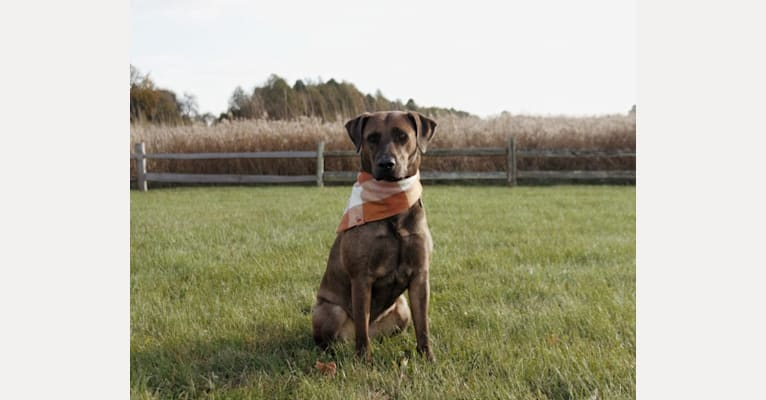 Photo of Nokona, an American Pit Bull Terrier, Labrador Retriever, Australian Cattle Dog, and Mixed mix in Ohio, USA