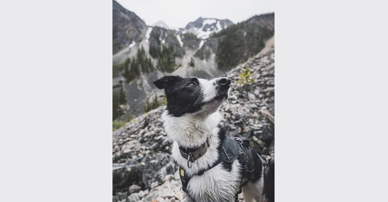 Photo of Jay, a Border Collie  in Alberta, Canada
