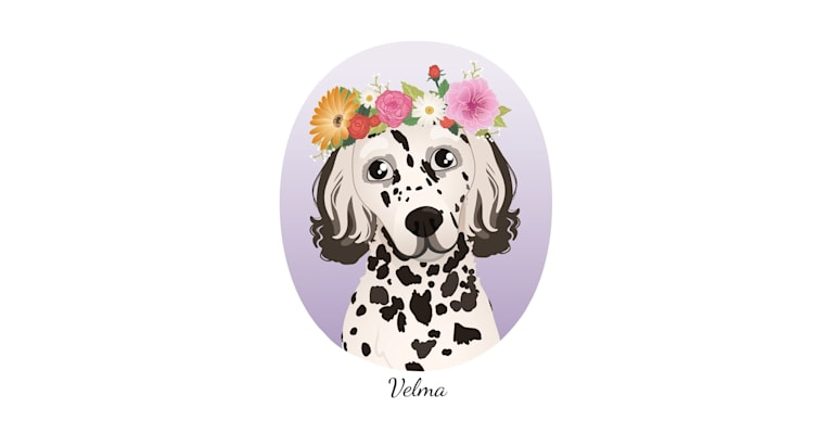Photo of Velma, an English Setter (27.4% unresolved) in Istanbul, Istanbul, Turkey