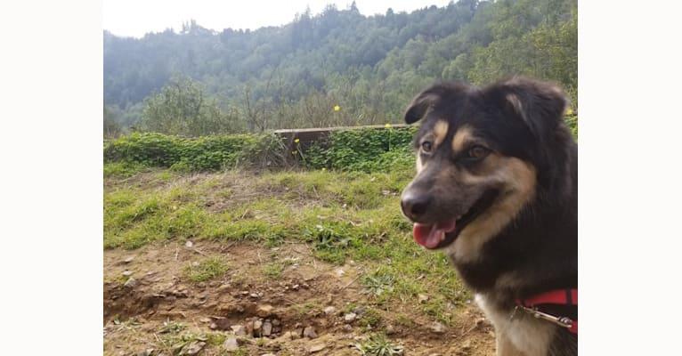 Photo of Mochi, an East Asian Village Dog  in Heilongjiang, China