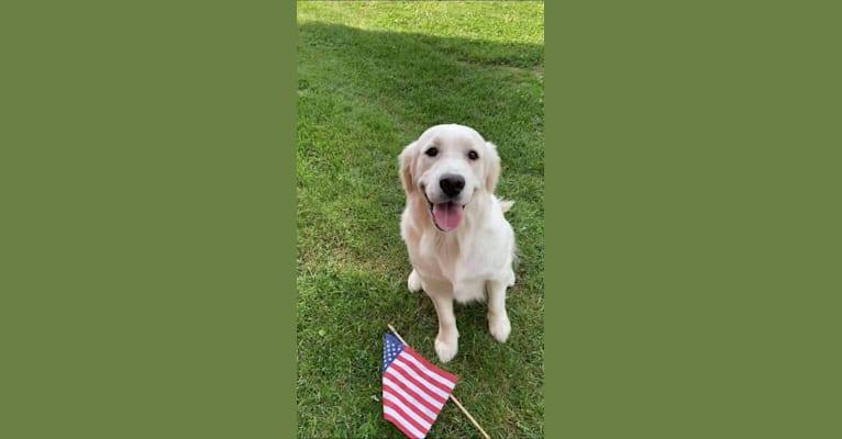 Photo of Sunny, a Golden Retriever