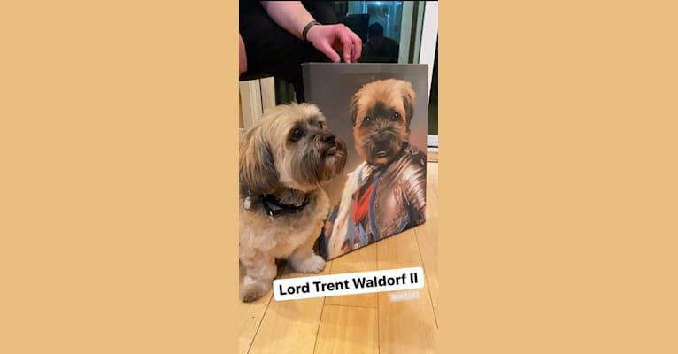Photo of Trent, a Lhasa Apso, Shih Tzu, and American Eskimo Dog mix in SF, California, USA
