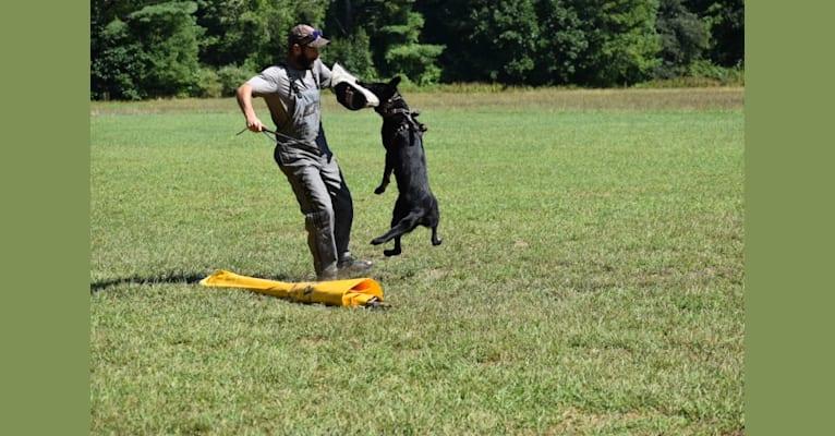 Photo of Pashka, a German Shepherd Dog  in Haus Morrisson German Shepherds, Green Valley Road, Ijamsville, MD, USA