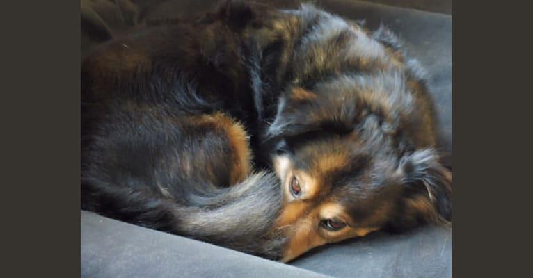 Photo of Leon, an European Village Dog