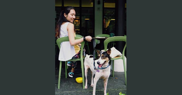Photo of Ealga, an East Asian Village Dog  in Singapore, Singapore