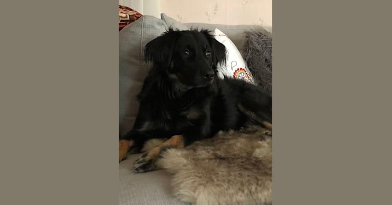 Photo of Kit, a Treeing Walker Coonhound, Golden Retriever, Chow Chow, American Eskimo Dog, German Shepherd Dog, and Cocker Spaniel mix in Georgia, USA