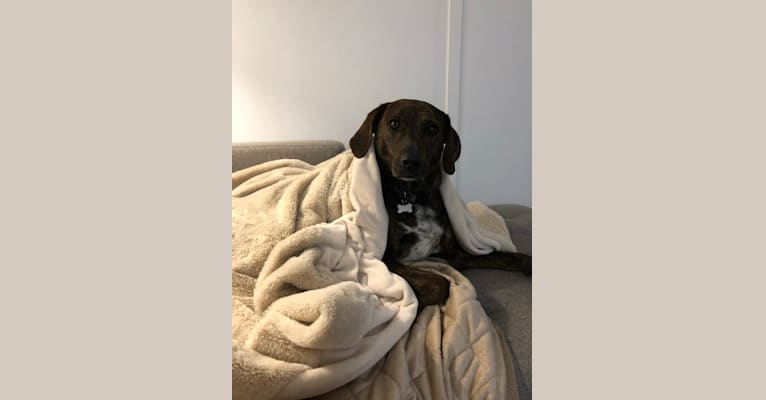Photo of Savannah, a Mountain Cur  in New York, New York, USA