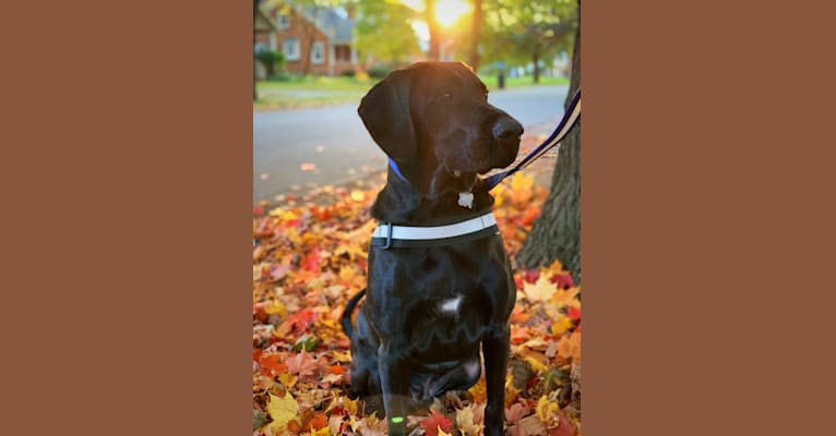 Photo of Henry, a Labrador Retriever and Redbone Coonhound mix in Mississippi, USA