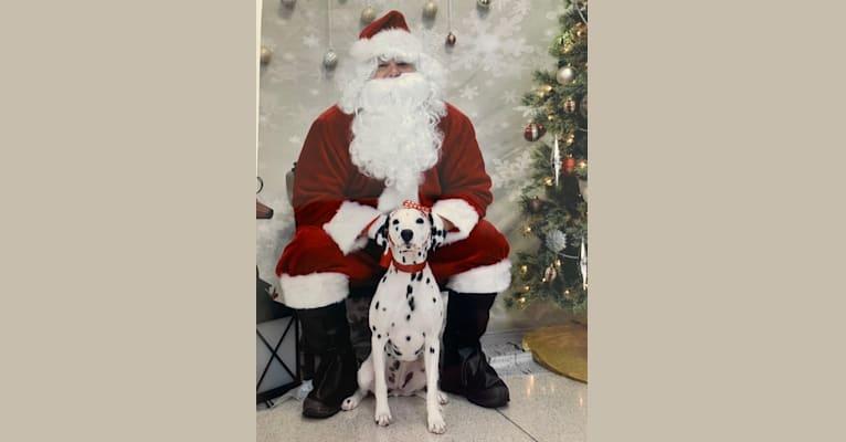 Photo of Sara, a Dalmatian  in Ohio, USA
